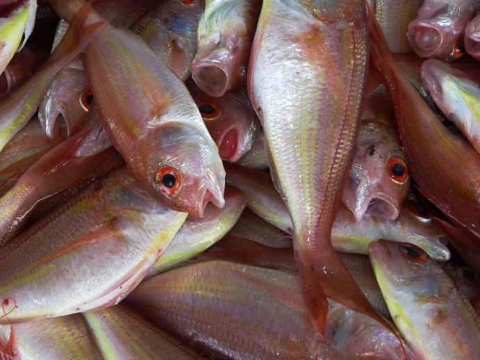 fish-fischer-ocean-market-61153.jpeg